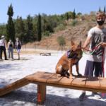 Málaga habilita nuevas zonas de paseo para perros
