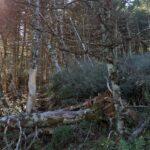 El Parque Nacional de las Nieves, un paso más cerca de ser una realidad