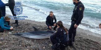 Rescatan un delfín varado en la playa de las Olas de Almería