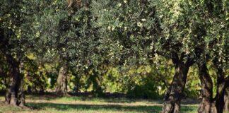 Demuestran la relevancia del olivar para la conservación de la biodiversidad en Europa