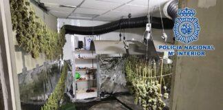 Hallan un cultivo de marihuana camuflado como un local de alquiler de caravanas