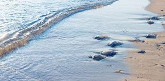 Idean un sistema para anticipar la llegada de medusas a la costa