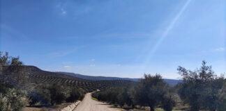El paisaje del olivar andaluz, candidato a Patrimonio Mundial de la Unesco