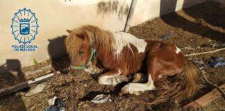 Investigado un hombre en Málaga por abandonar a su poni