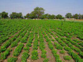 SAECA y los avales de coste 0 para el personal agrario