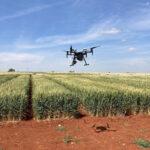 La tecnología reducirá la contaminación por micotoxinas en alimentos procedentes de cebada y trigo