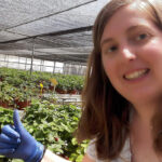 Investigan la obtención de otras variedades de frutos rojos más saludables