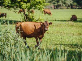 Criterios para elegir el tipo de financiación de un proyecto agrícola o ganadero