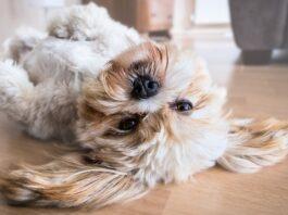 Día Mundial del Perro: los mejores destinos costeros dog-friendly
