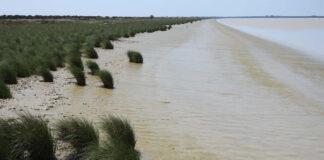 La calidad del plancton del estuario del Guadalquivir aumenta con la salinidad del agua
