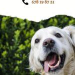 Amores peludos: qué necesita tu perro para ser una mascota feliz