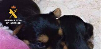 Detenida por utilizar fotos de cachorros en venta para estafar