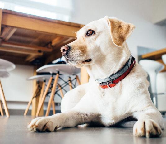 Nuestro magnífico amigo, el perro