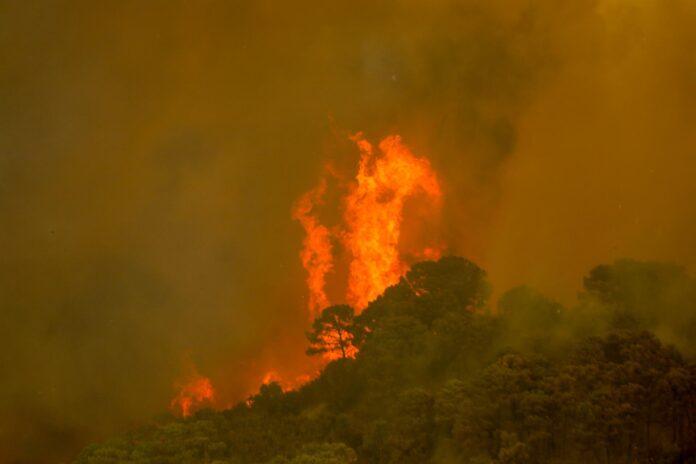 Fallece un bombero en las labores de extinción del incendio en Sierra Bermeja
