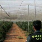 Guardia Civil desarrolla con éxito la mayor intervención antidroga en Granada