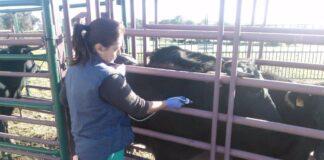 Vacunan de urgencia contra la lengua azul tras detectar dos focos en Huelva