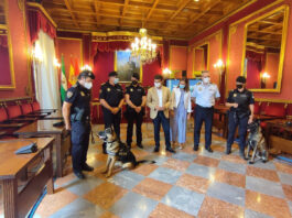 Stan Lee, el agente canino rescatado del maltrato, volverá a olfatear las calles de Granada