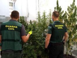 Acaban con un cultivo de marihuana en un patio comunitario en Puente Genil